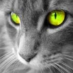gatti-digitali
