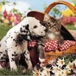 dalmata e gatto
