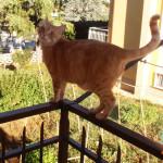 gatto-balcone
