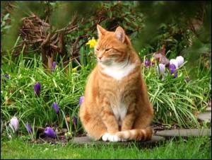 gatto-in-giardino